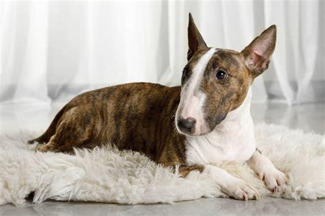 Good Apartment Dogs Math Wallpaper Golden Find Free HD for Desktop [pastnedes.tk]