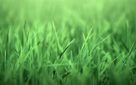 Grass Wallpaper HD Wallpapers Download Free Images Wallpaper [1000image.com]