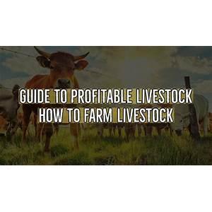 Guide to profitable livestock how to farm livestock livestock farming for beginners coupons