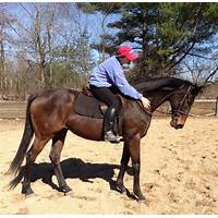 Cash back for help with off track thoroughbred horses for ottb owners