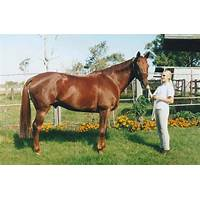 Help with off track thoroughbred horses for ottb owners secret