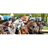 Help with off track thoroughbred horses for ottb owners tips