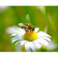 Honey bee plants tutorials