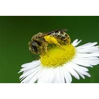 Honey bee plants online tutorial