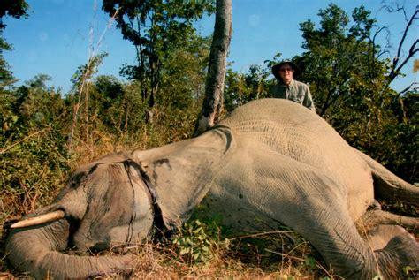 Hornady Elephant