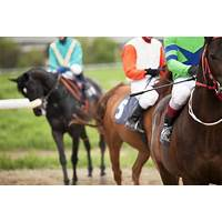 Horse racing betting service bet alchemist work or scam?