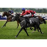 What is the best horse racing handicapping?