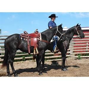 Horse training train a horse training horses train your horse guides