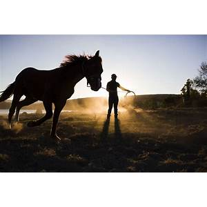 Horse training train a horse training horses train your horse secret