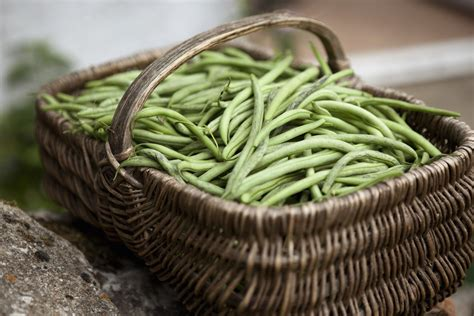 How Many Carbs In Green Beans Watermelon Wallpaper Rainbow Find Free HD for Desktop [freshlhys.tk]