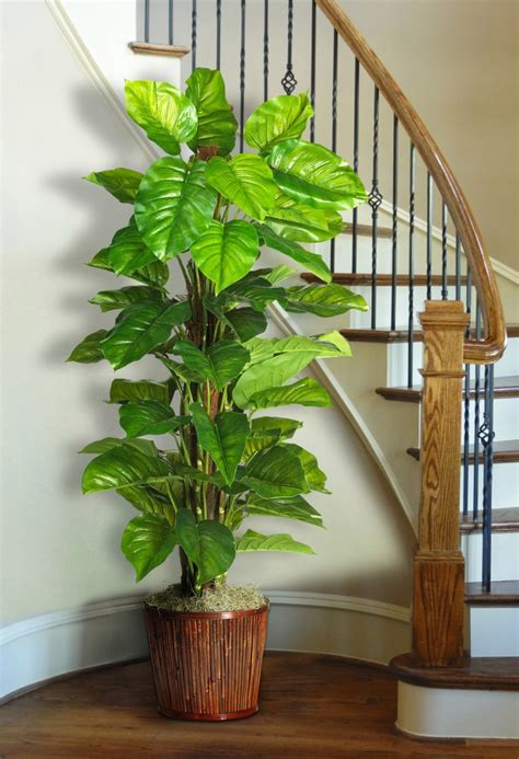 How To Decorate Home With Plants Home Decorators Catalog Best Ideas of Home Decor and Design [homedecoratorscatalog.us]