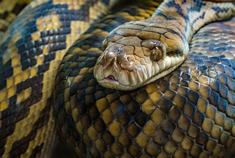 How To Get A Snake Out Of Your Garage Make Your Own Beautiful  HD Wallpapers, Images Over 1000+ [ralydesign.ml]