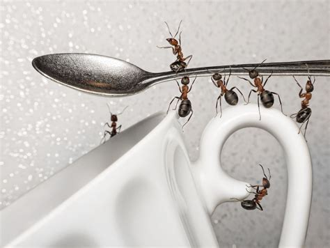 How To Get Rid Of Ants In The Kitchen Watermelon Wallpaper Rainbow Find Free HD for Desktop [freshlhys.tk]