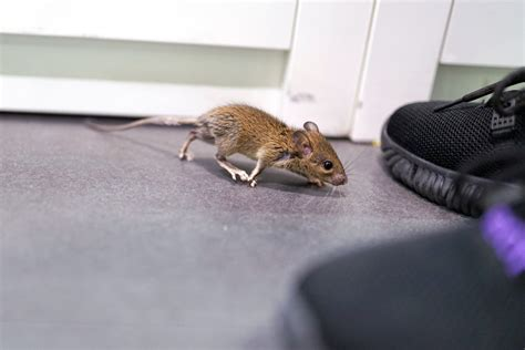 How To Get Rid Of Rats In Garage Make Your Own Beautiful  HD Wallpapers, Images Over 1000+ [ralydesign.ml]