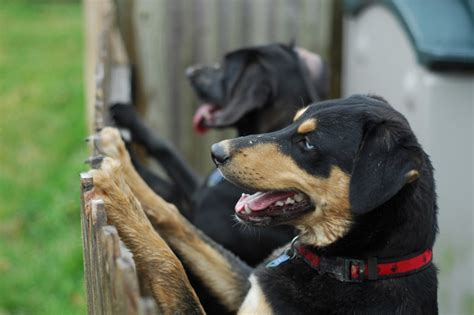 How To Handle Territorial Aggression In Dogs