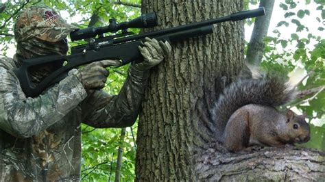 How To Hunt Squirrels With A Air Rifle