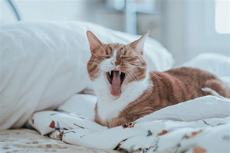 How To Keep Cats Off Furniture Watermelon Wallpaper Rainbow Find Free HD for Desktop [freshlhys.tk]