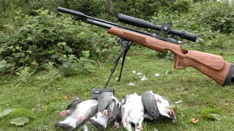 How To Shoot Pigeons With An Air Rifle