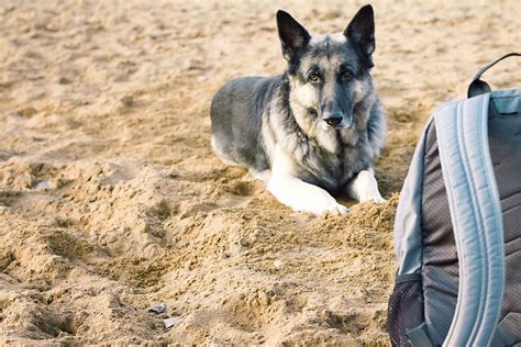 how to train a dog to guard an object.aspx Image