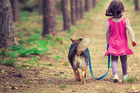 how to train a dog to protect a child Image