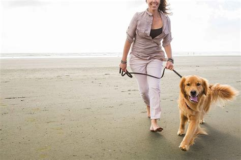 How To Train A Dog To Walk Beside You