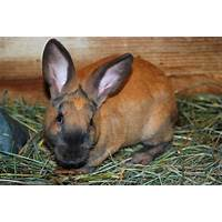 How to breed rabbits for meat, profit and fun promo codes