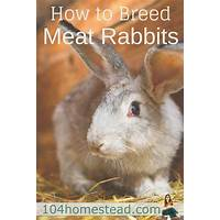 How to breed rabbits for meat, profit and fun compare