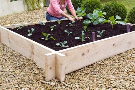 How to build a raised vegetable bed Image