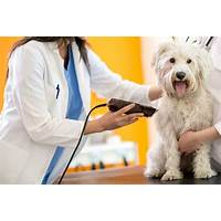 How to groom your dog at home ***updated that works