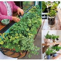 How to grow herbs and vegetables in small spaces kitchen gardens coupon code