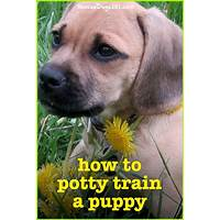 How to housetrain & potty train any dog promo