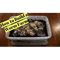 How to make a worm farm coupon