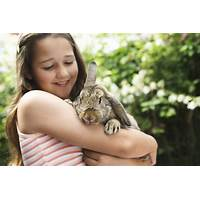 How to raise rabbits the complete beginners guide for rabbit owners inexpensive