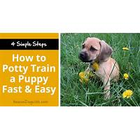 How to train my puppy fast track system is it real?