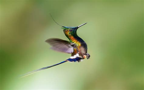 Hummingbird Wallpaper HD Wallpapers Download Free Images Wallpaper [1000image.com]