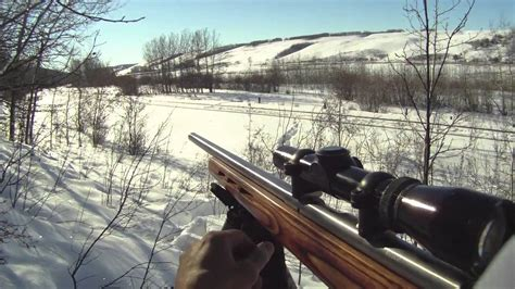 Hunting Coyotes With 22 Magnum Rifle