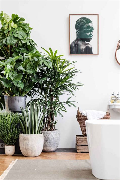 Ideas For Indoor Potted Plants Design