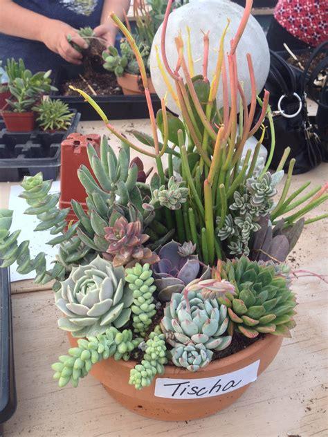 Ideas For Indoor Succulents Design