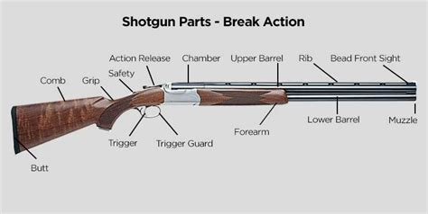 Identifying Areas Break Action Shotgun