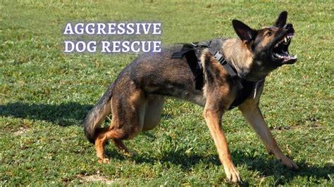 Idiopathic Aggression Dogs Rescue