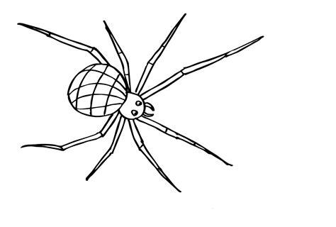 Insekten Ausmalbild Kostenlos