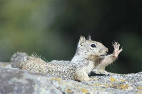 Is It Legal To Kill Ground Squirrel With An Ar-15