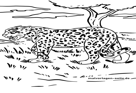 Jaguar Malvorlage