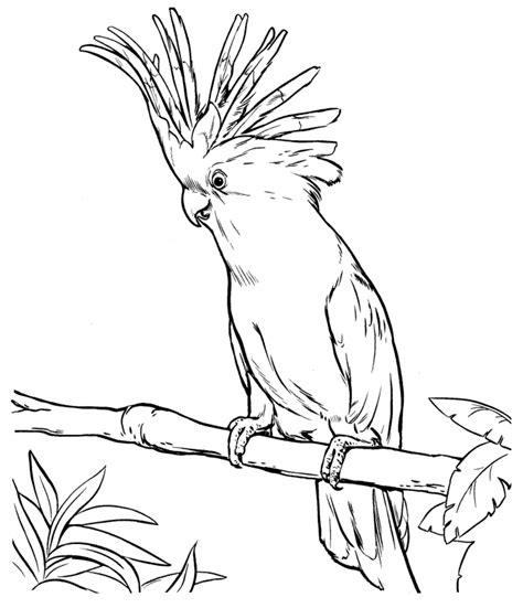 Kakadu Malvorlage