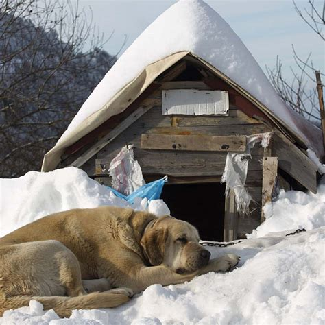 keep dog house warm in winter