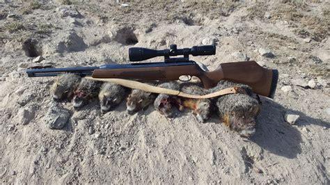 Kill Pig 22 Rifle