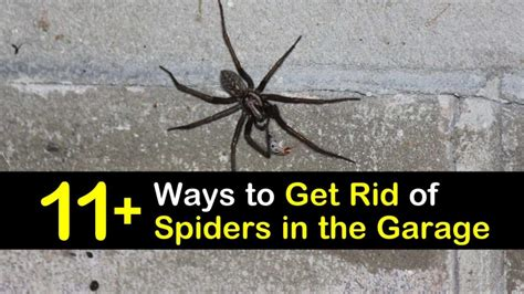 Kill Spiders In Garage Make Your Own Beautiful  HD Wallpapers, Images Over 1000+ [ralydesign.ml]