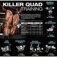 Killer quads leg training program for men and women programs