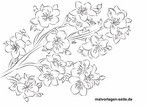 Kirschblüten Malvorlage