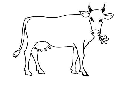 Kuh Malvorlage Kostenlos